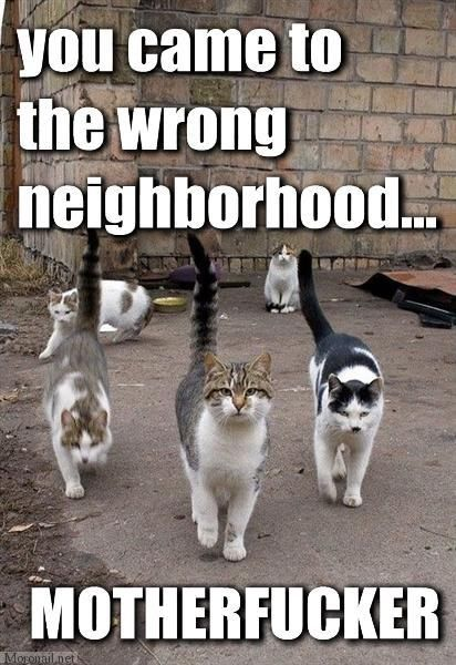 Internet Cat Meme