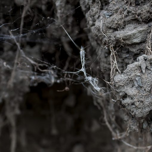 Spooky Spiderwebs
