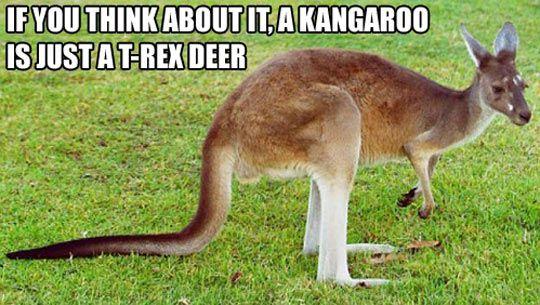 Internet Kangaroo Meme